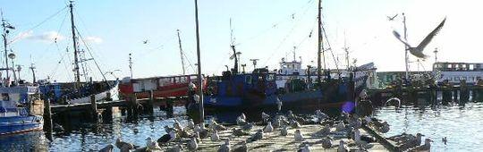 Möwen am Sassnitzer Hafen