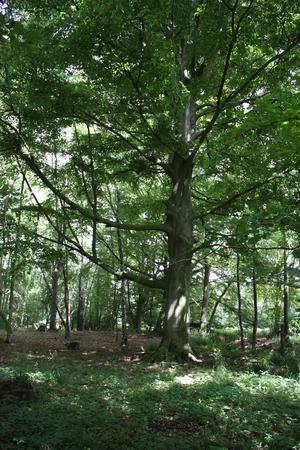 Altholz im Projektgebiet