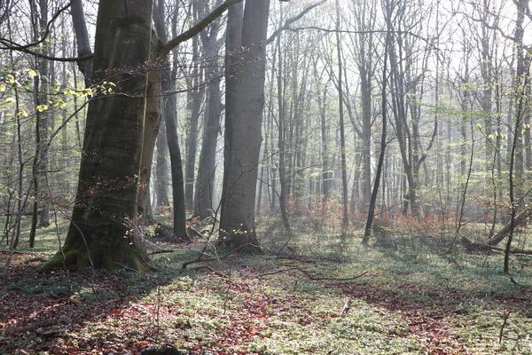 In der Nordvorpommerschen Waldlandschaft